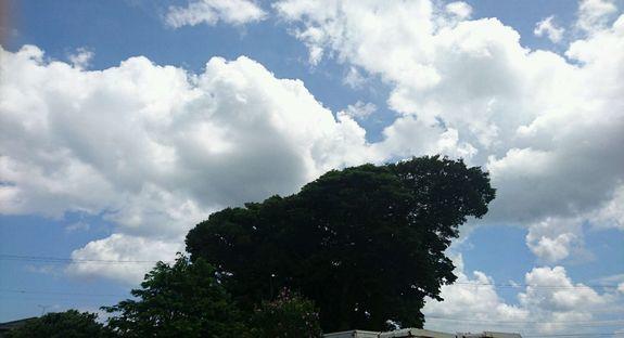 神様の木.jpg